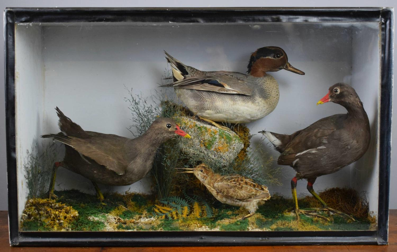 Edwardian Cased Display of Taxidermy Birds