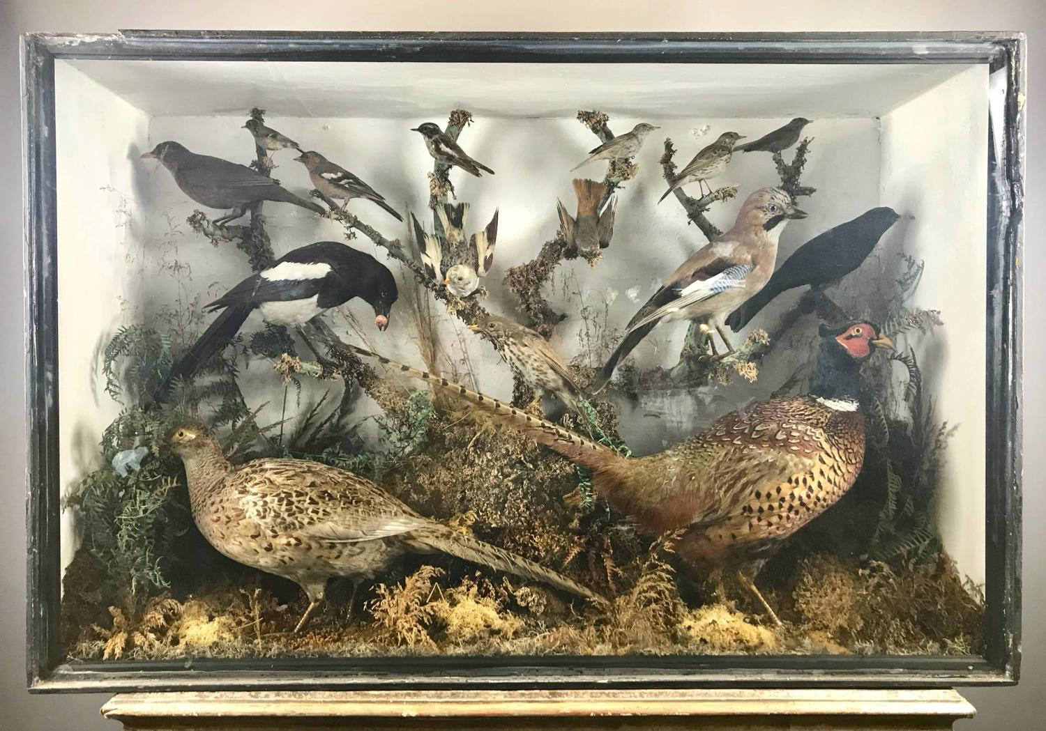 Large Cased Display of Taxidermy Birds
