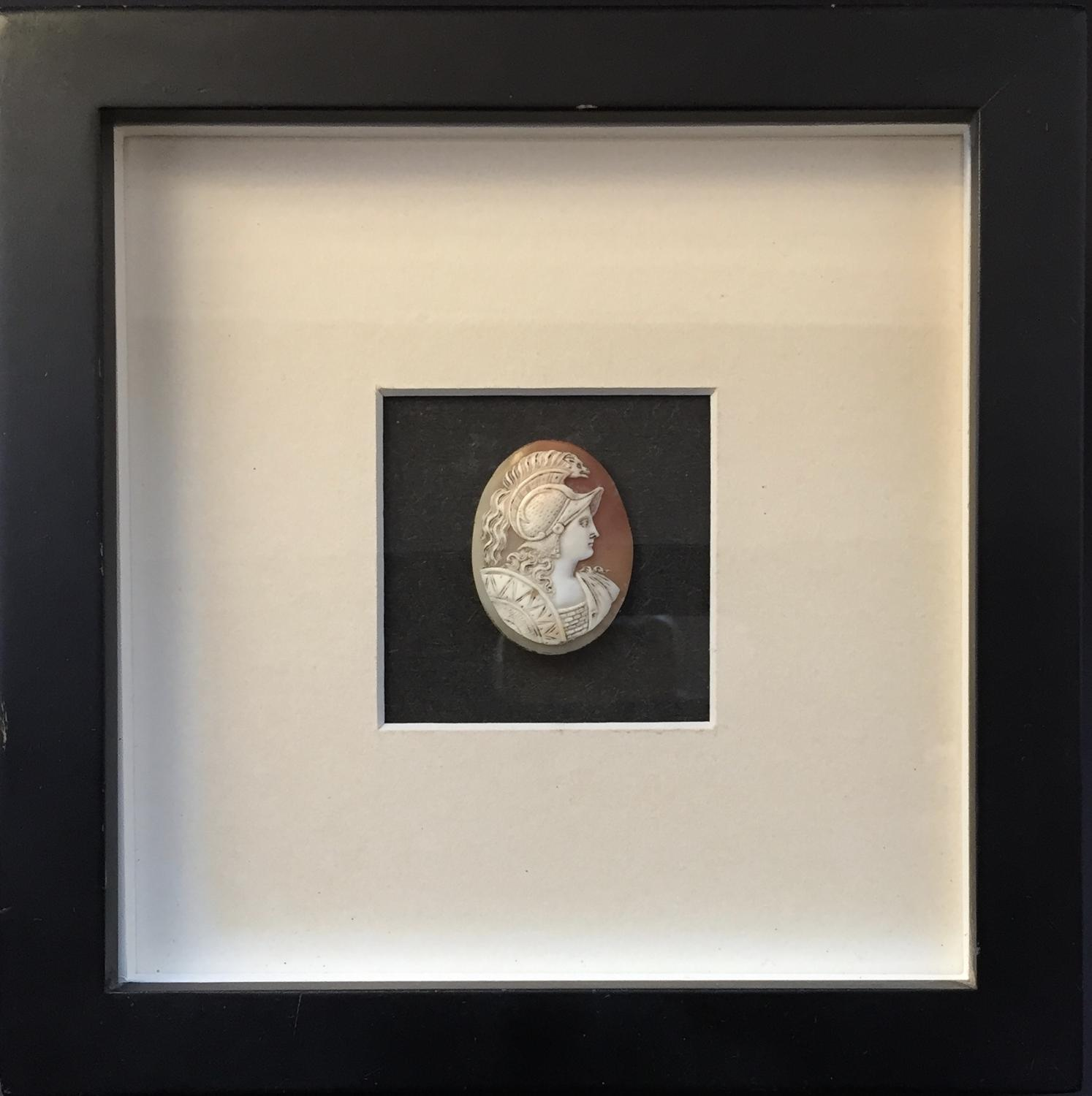Carved Shell Cameo of Minerva in a shadow box frame