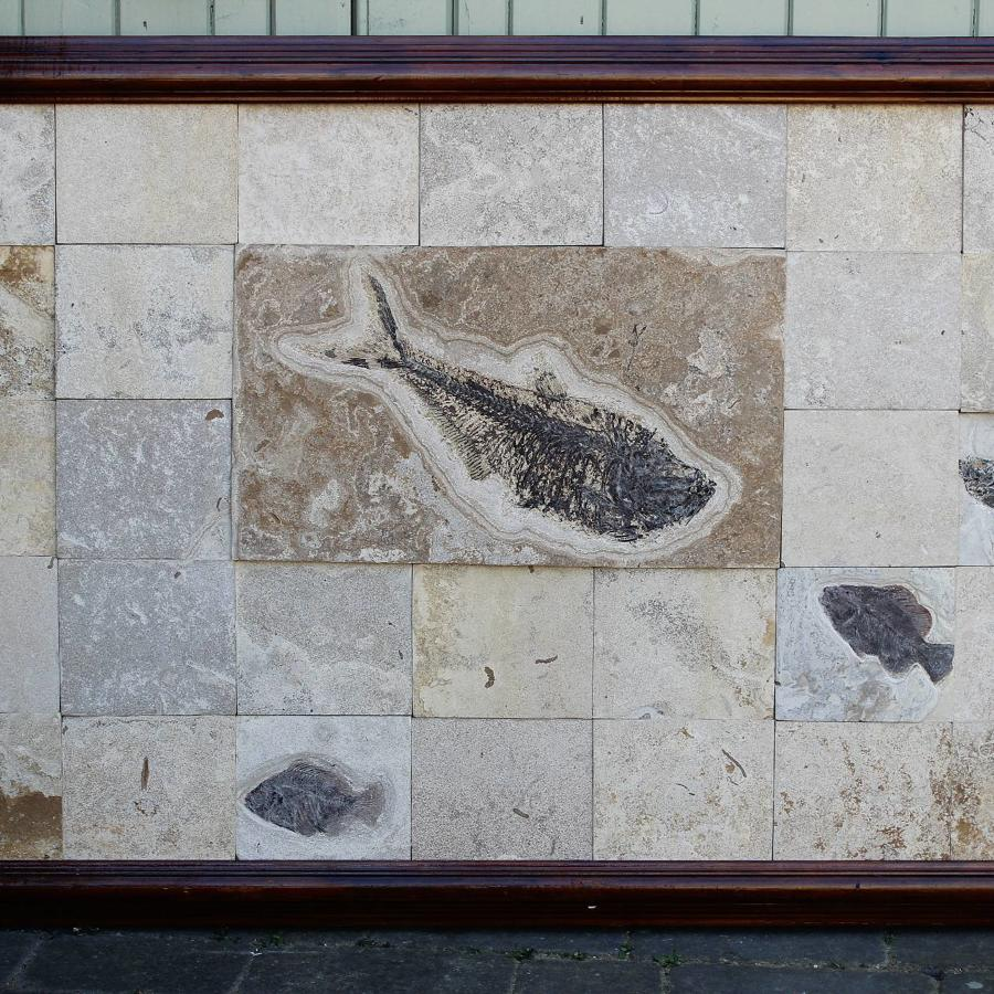 Large Fossil Fish Panel - Green River Formation, Wyoming