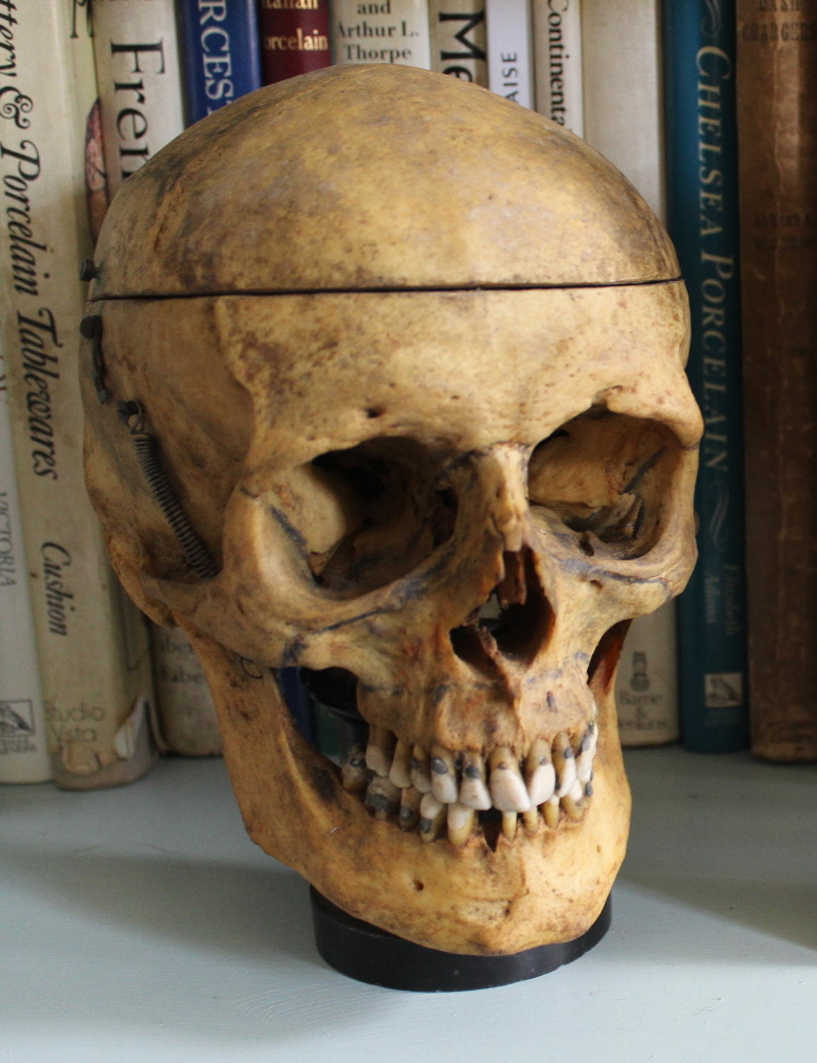 A Vintage Articulated Human Skull