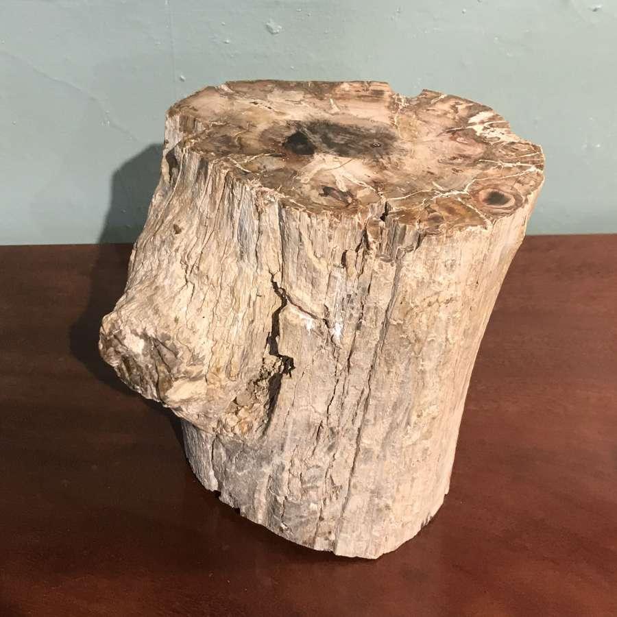 Large Specimen of Petrified Tree