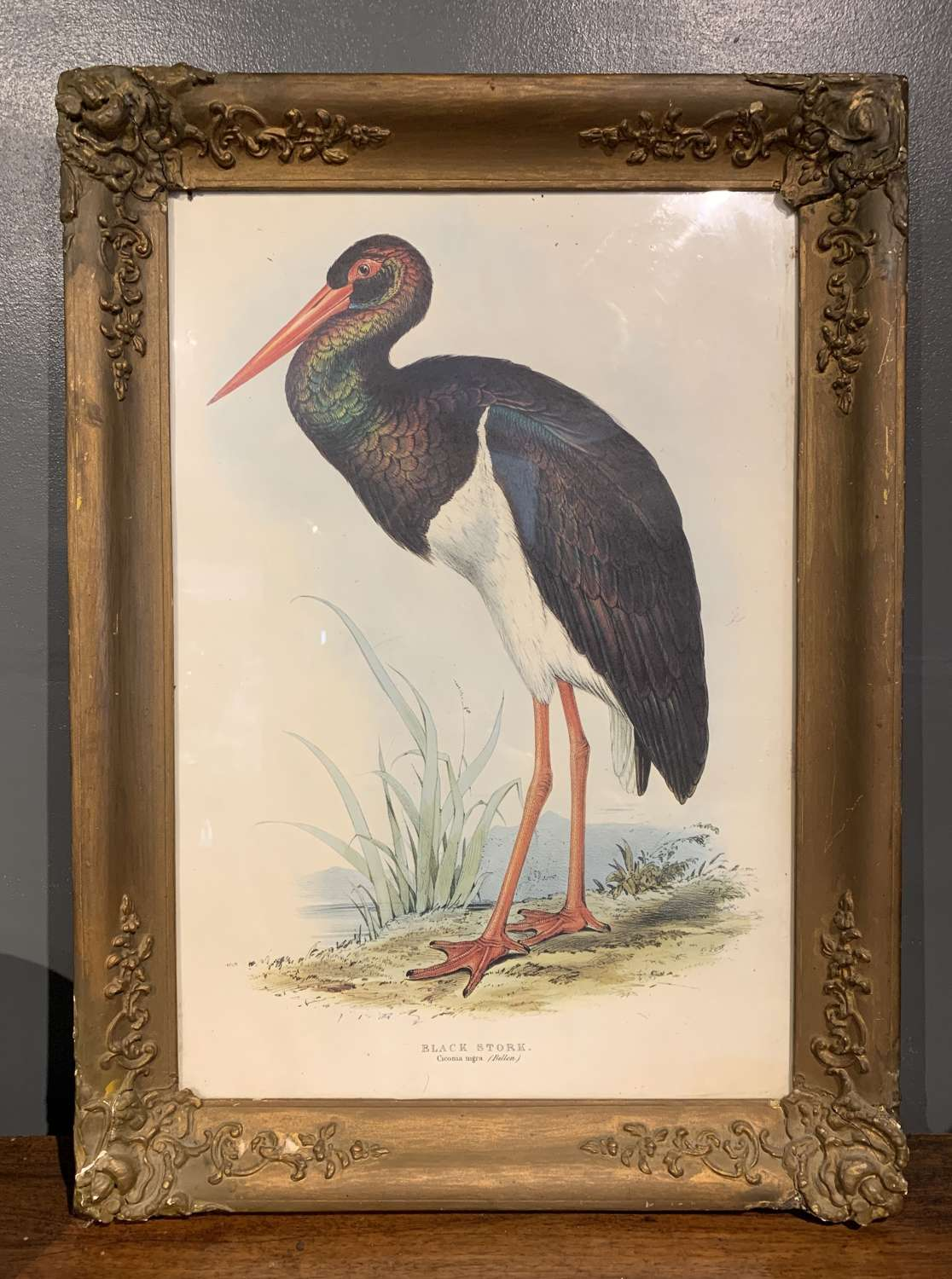 Edward Lear Lithograph 'Black Stork' from John Gould's Birds of Europe